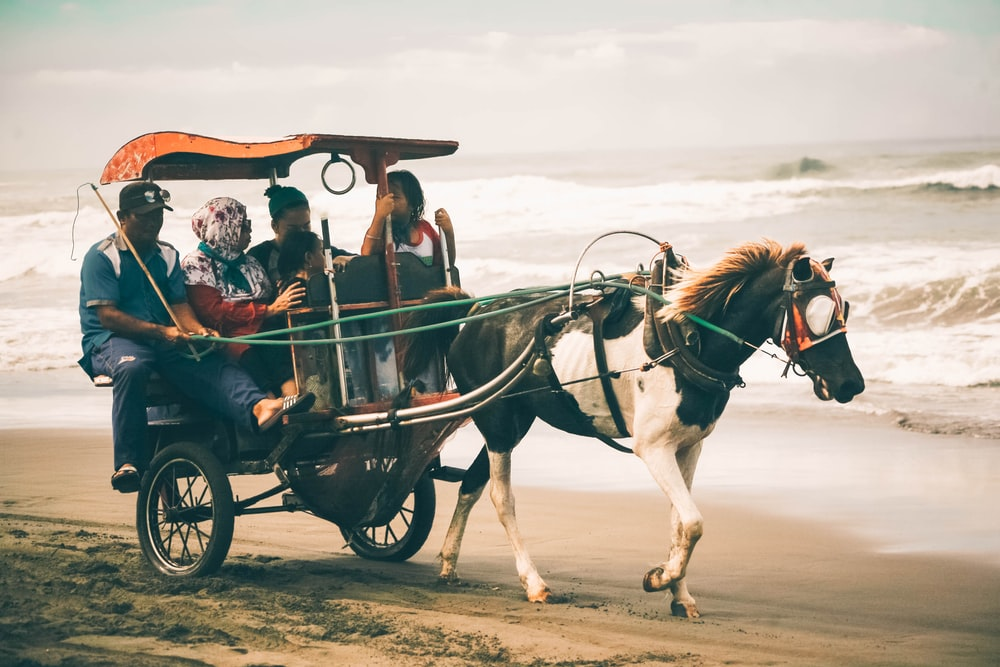 photography of people riding on horse carriage near shoreline
