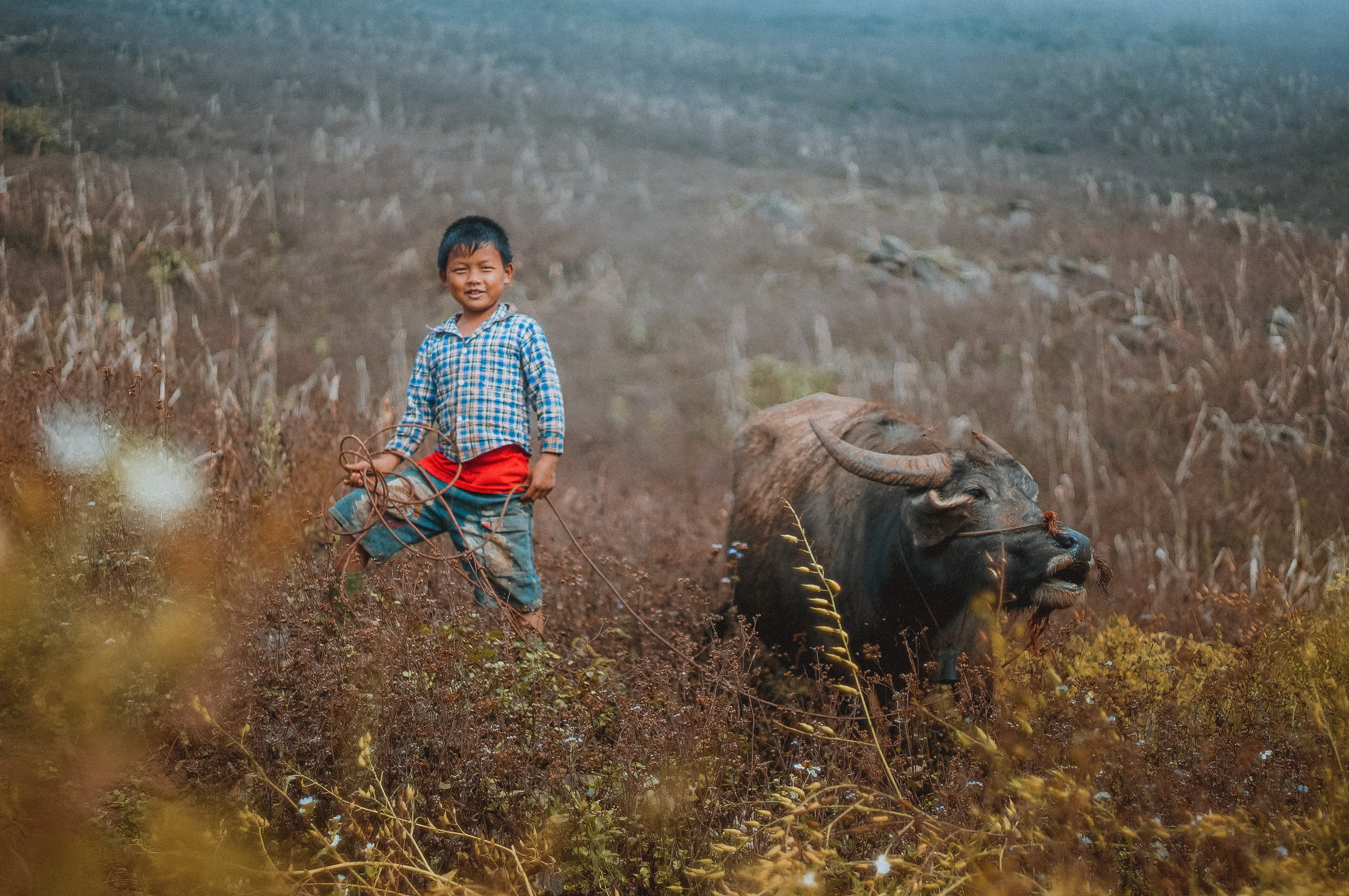 boy standing on brown grass field near black water buffalo