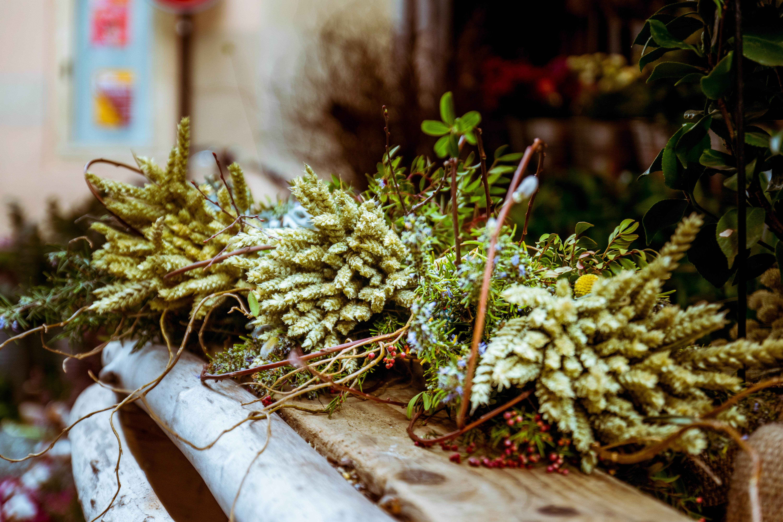 green plants on wooden rack