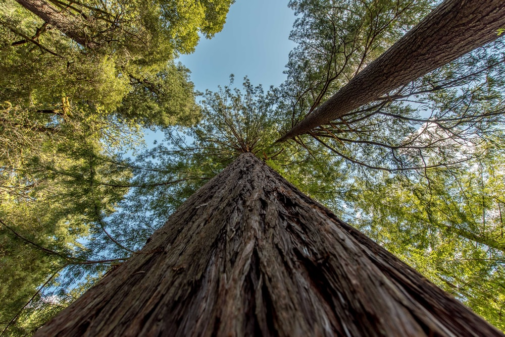 low angle photography of tree under blue sky