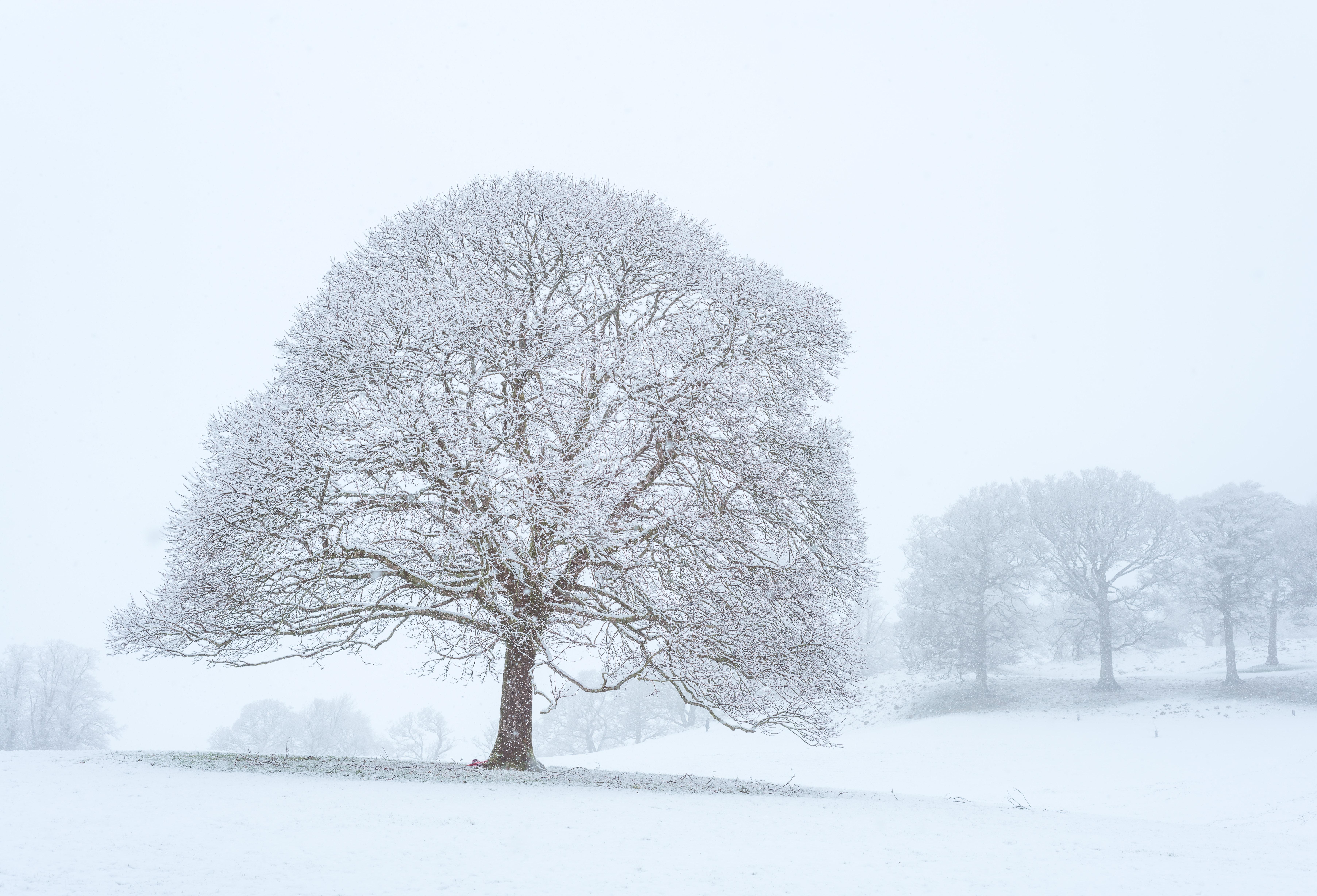 white and brown tree illustation