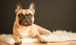 Dog Constipation: Causes, Treatment & Prevention