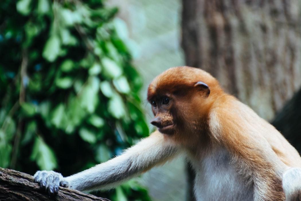 A click of a monkey