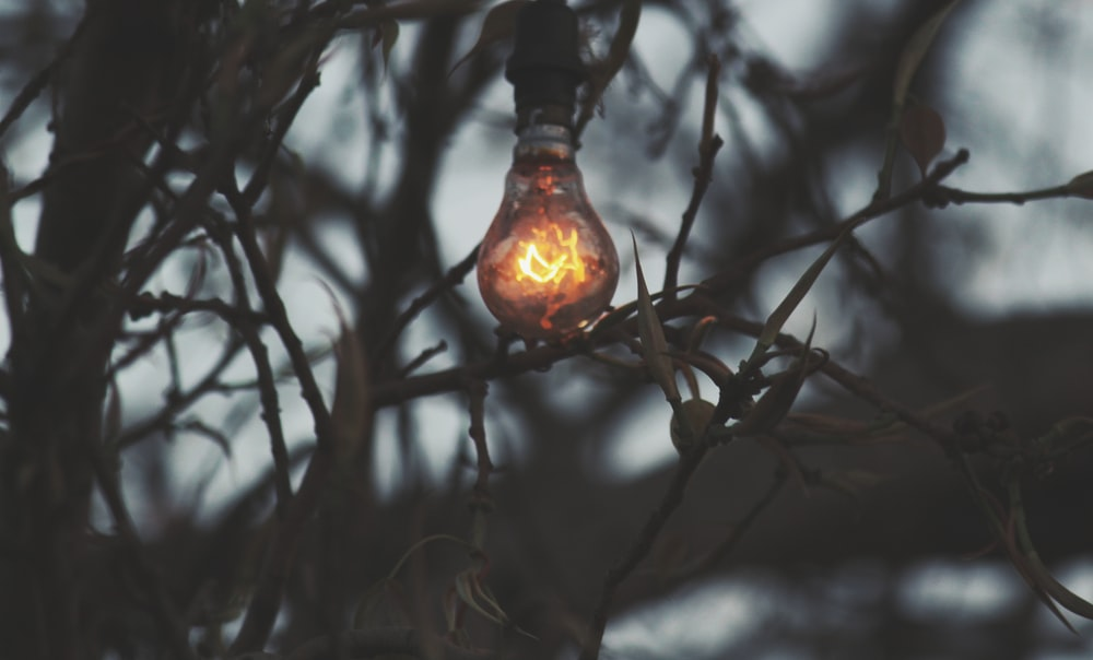 turned on light on branch