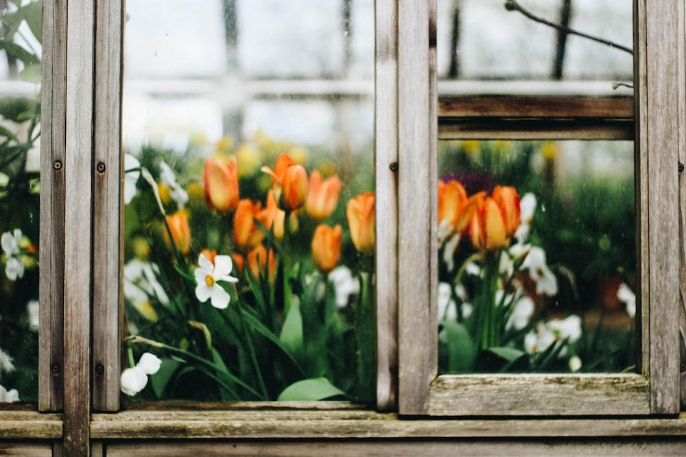 yellow tulips flower
