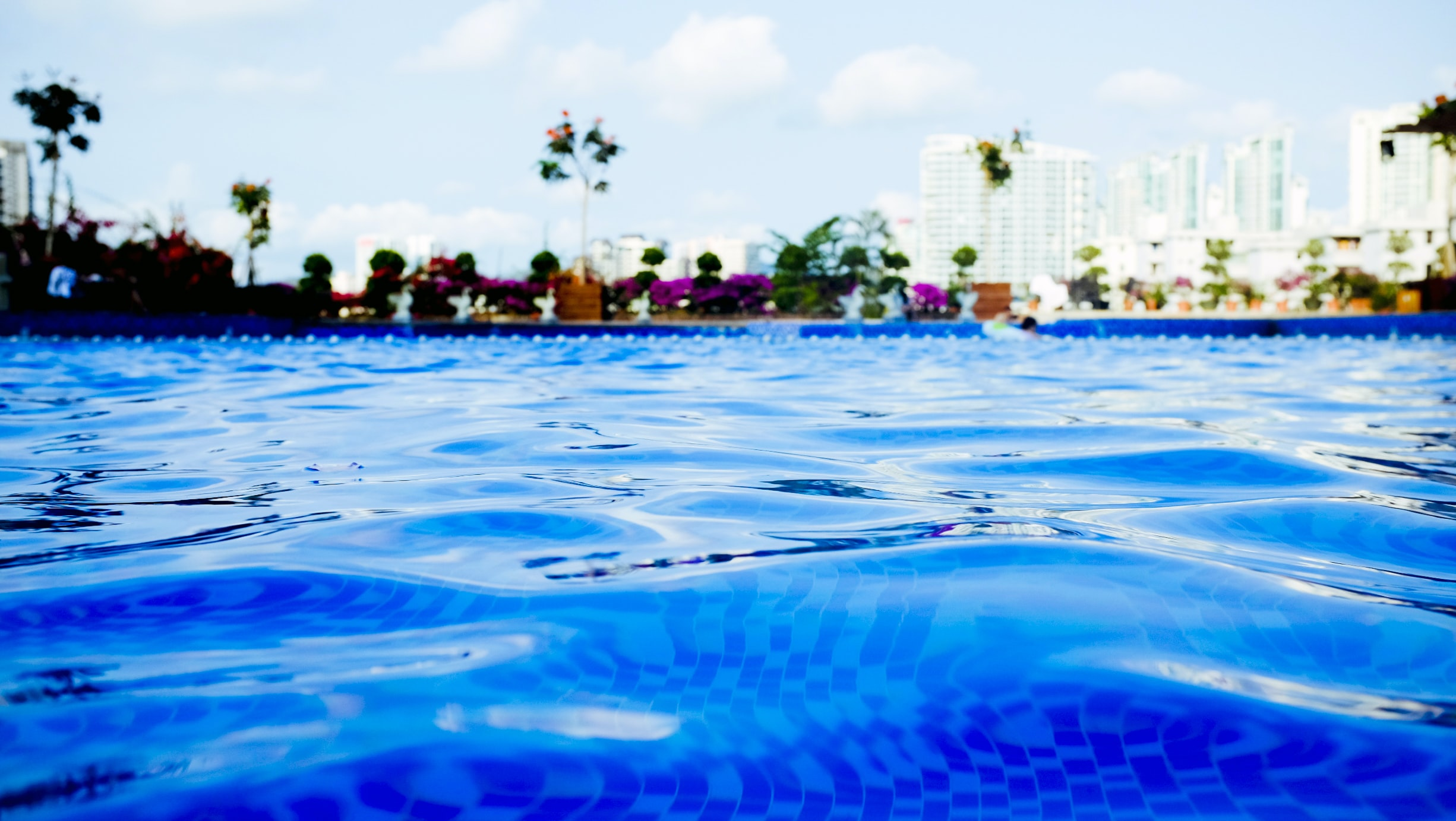 blue swimming pool near tree at daytime