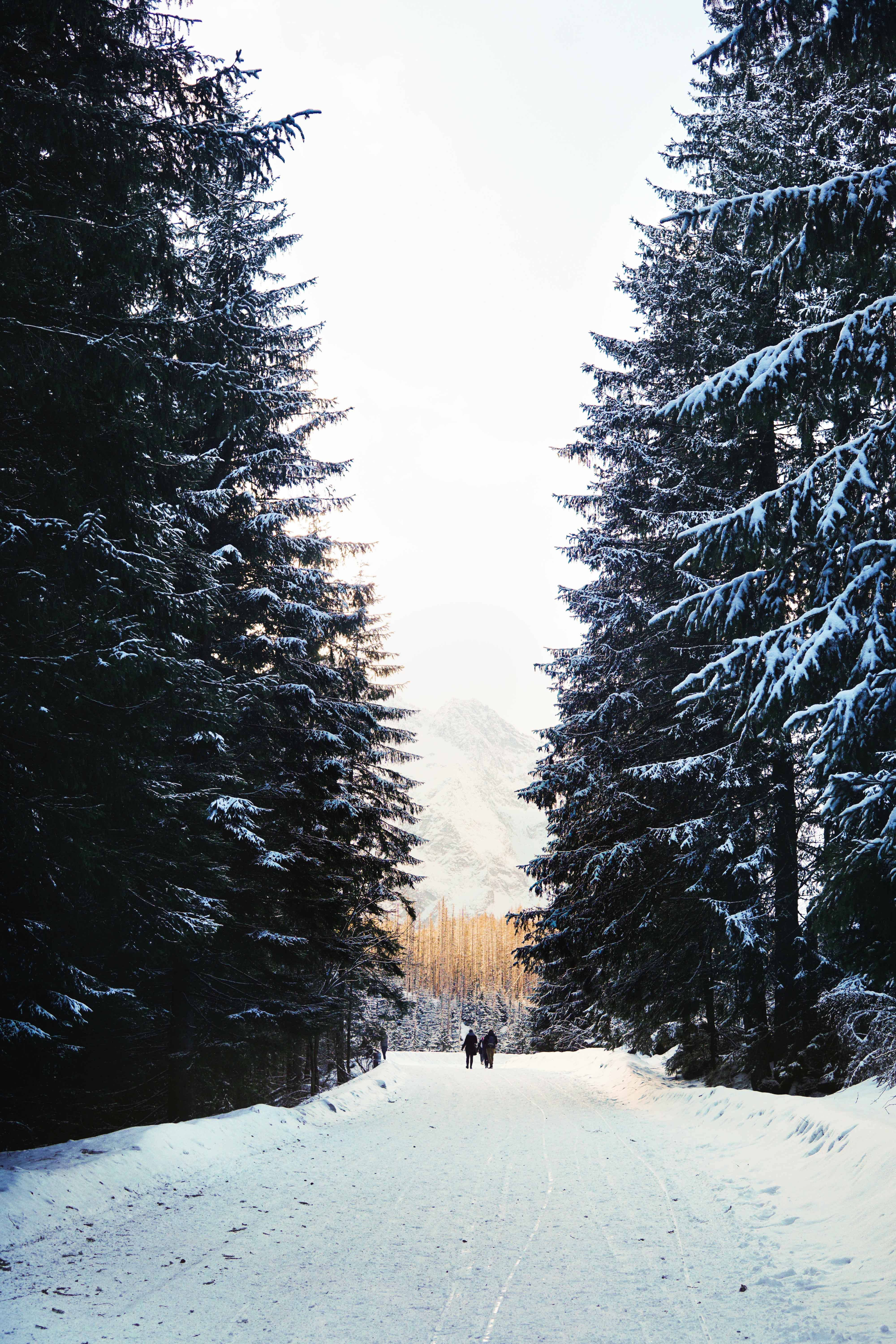 two person standing in between pine trees covered with snow