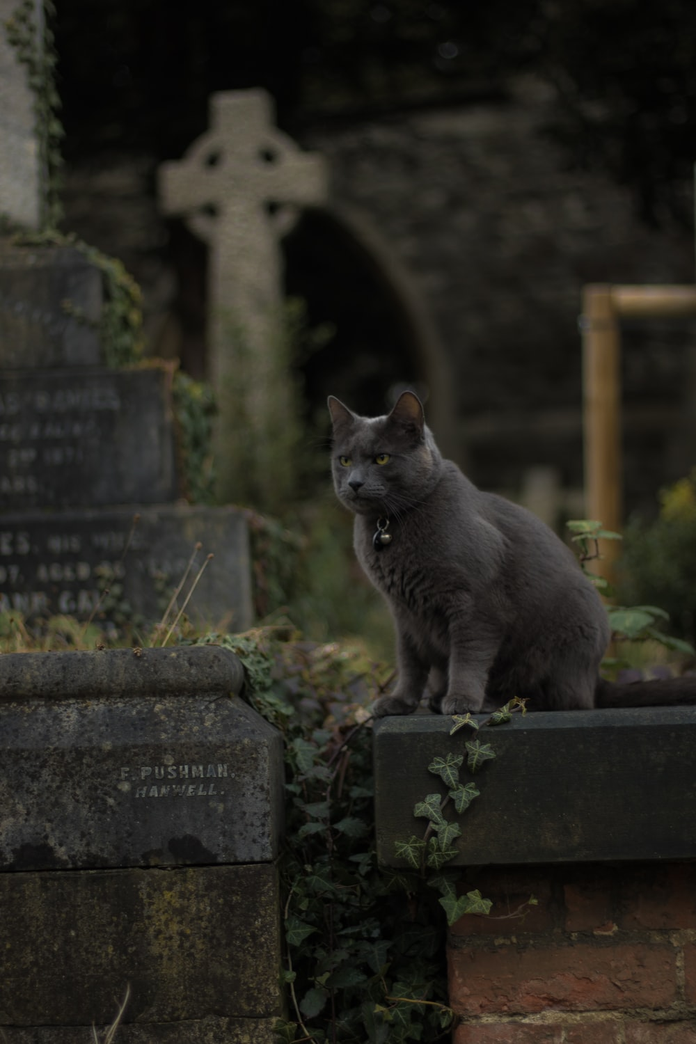 siamese cat on gray stone during daytime