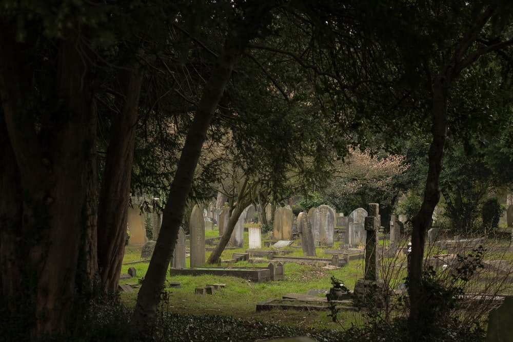 one perspective angle photo of graves