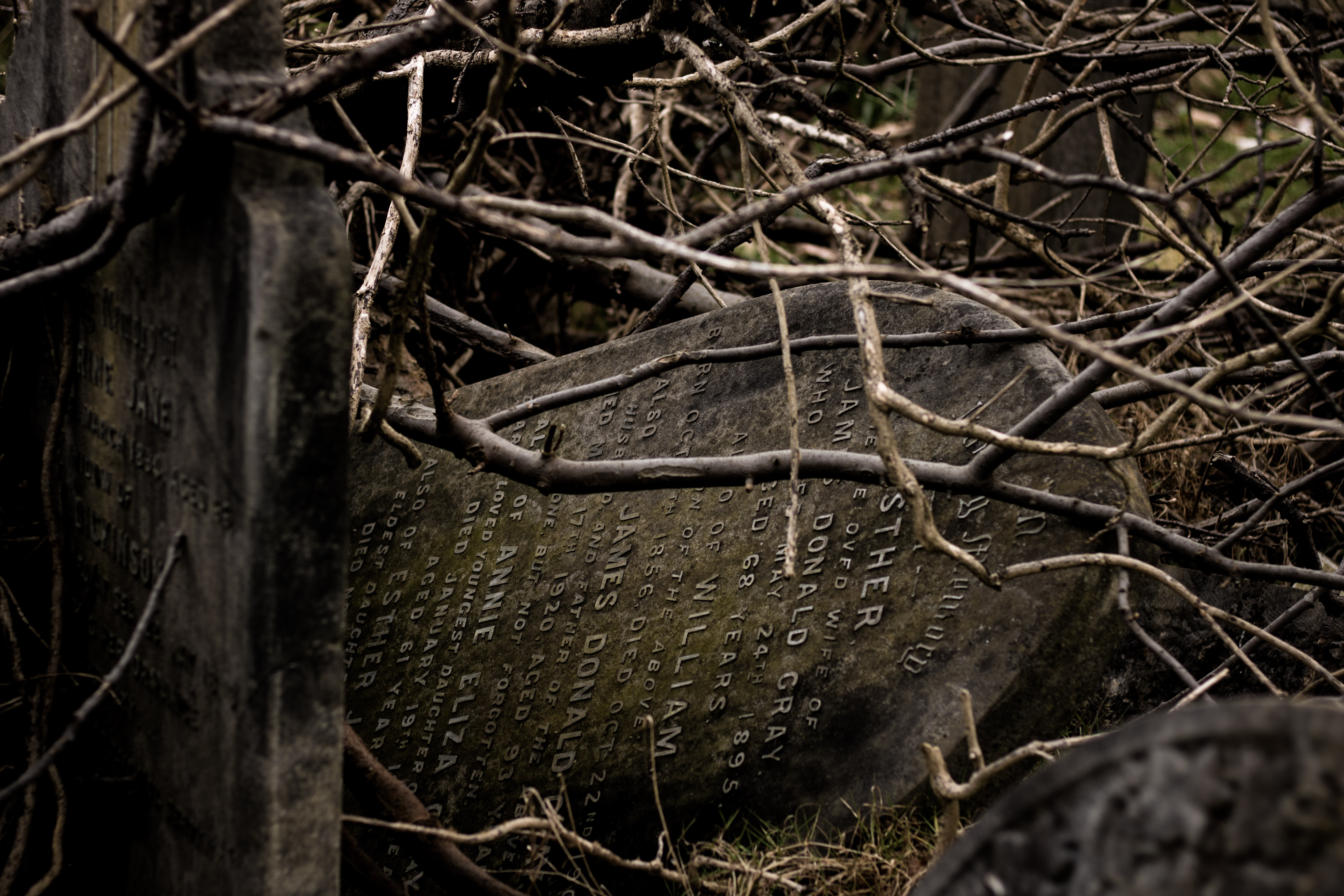 two tombstones placed under dried branches