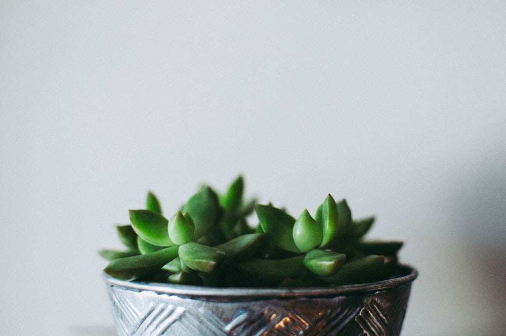 focus photo of potted jade plant