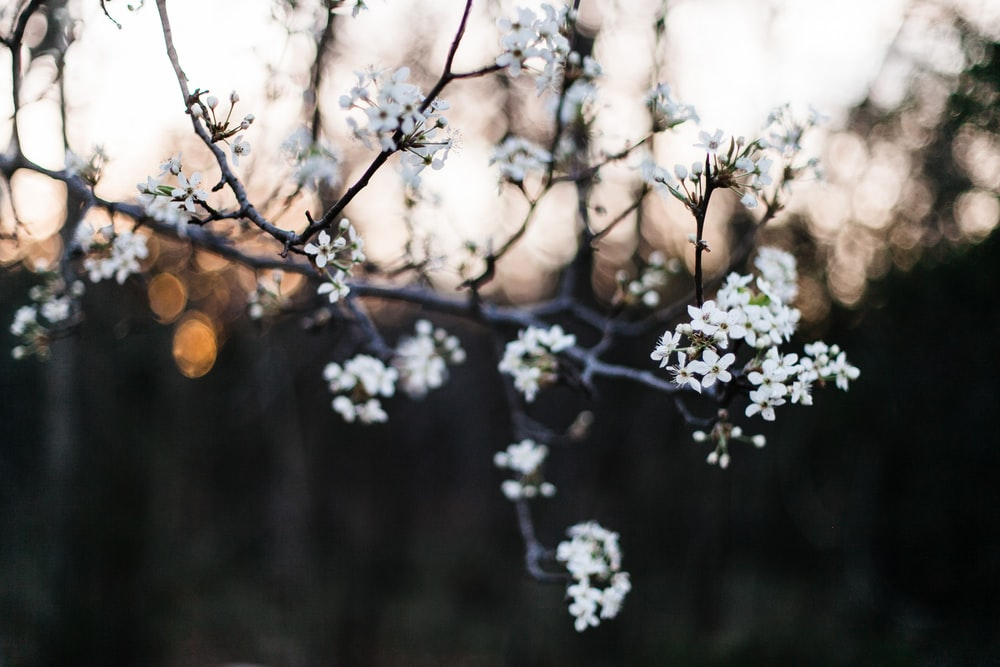 White flower flower tree branch and blossom hd photo by heather white flowers in tilt shift photography mightylinksfo