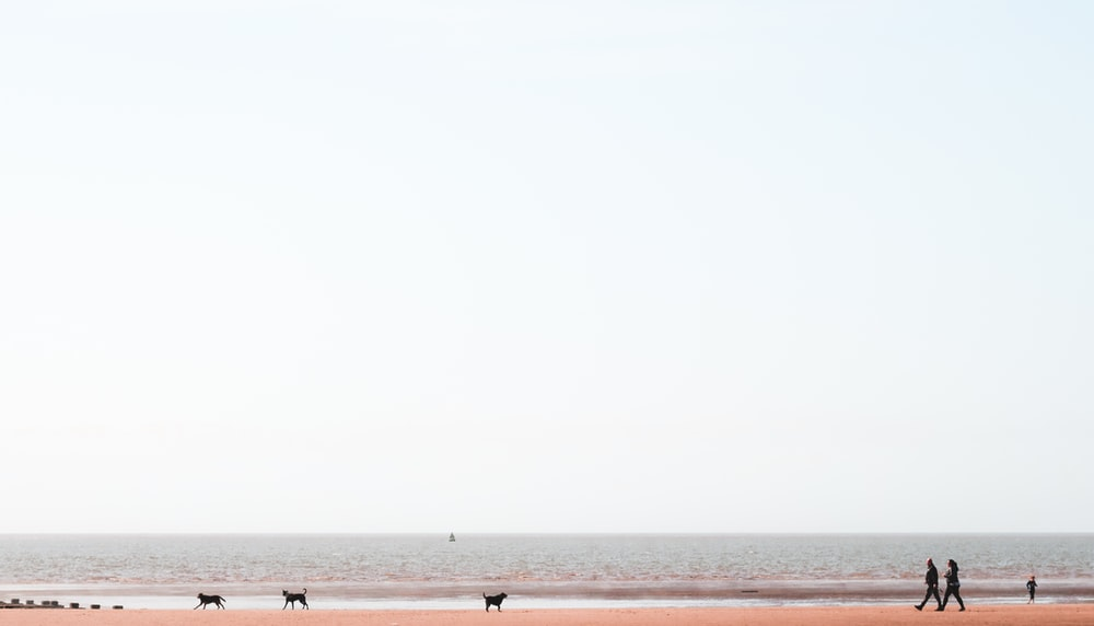 photography of shoreline with walking dogs and people