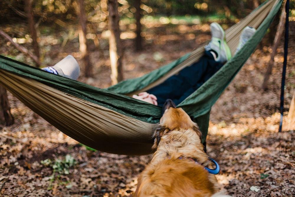 dog biting hammock with person sleeping