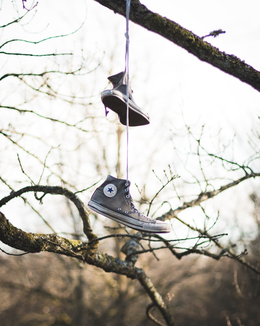 photo of gray Converse All-Star high-tops hanged on tree