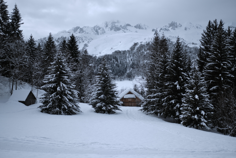 house between trees near mountain