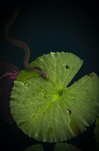 brown snake on top of green leaf
