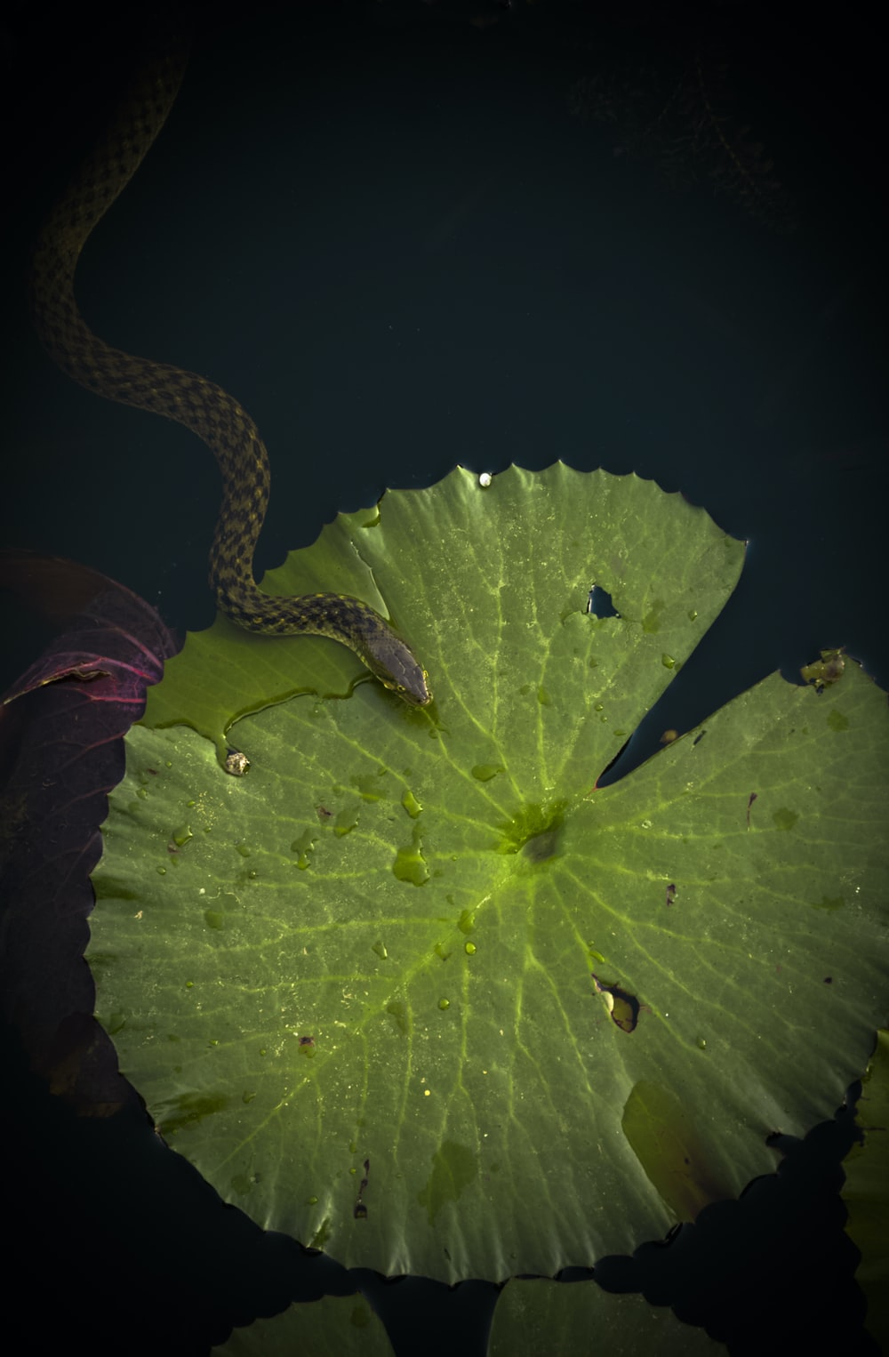brown snake on top of green leaf