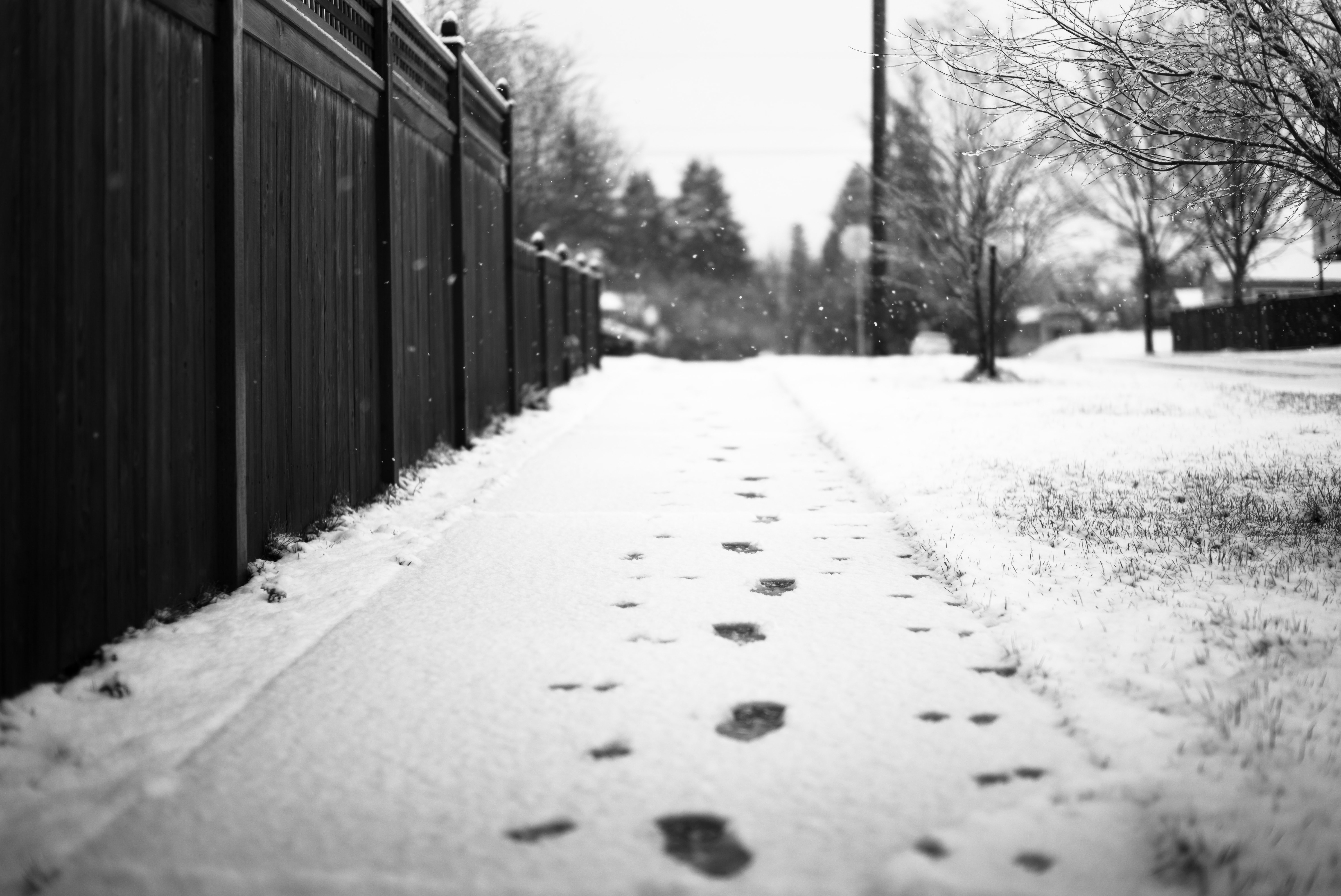grayscale photography of footprints on snow