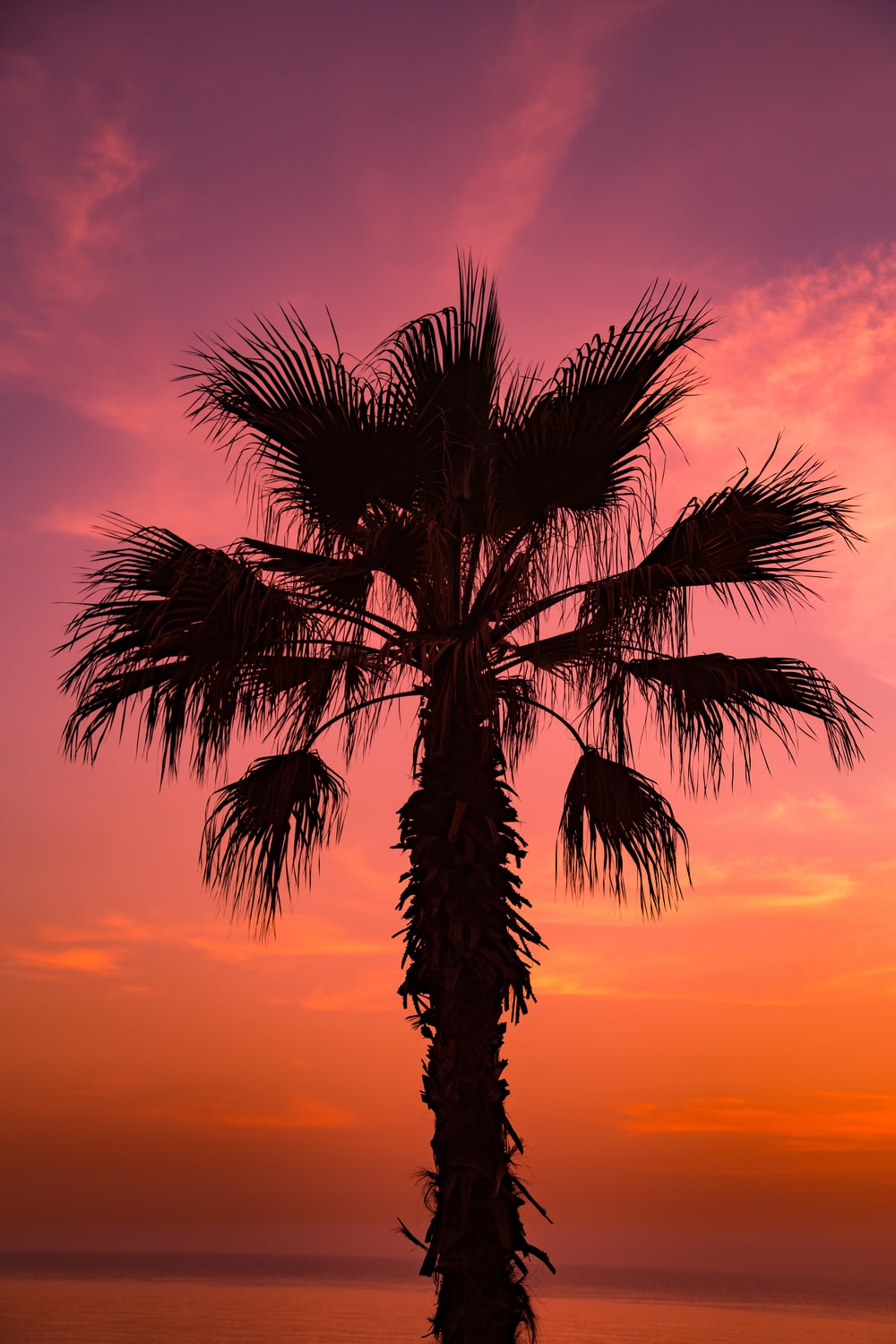 sago palm tree under pink sky at sunsetr