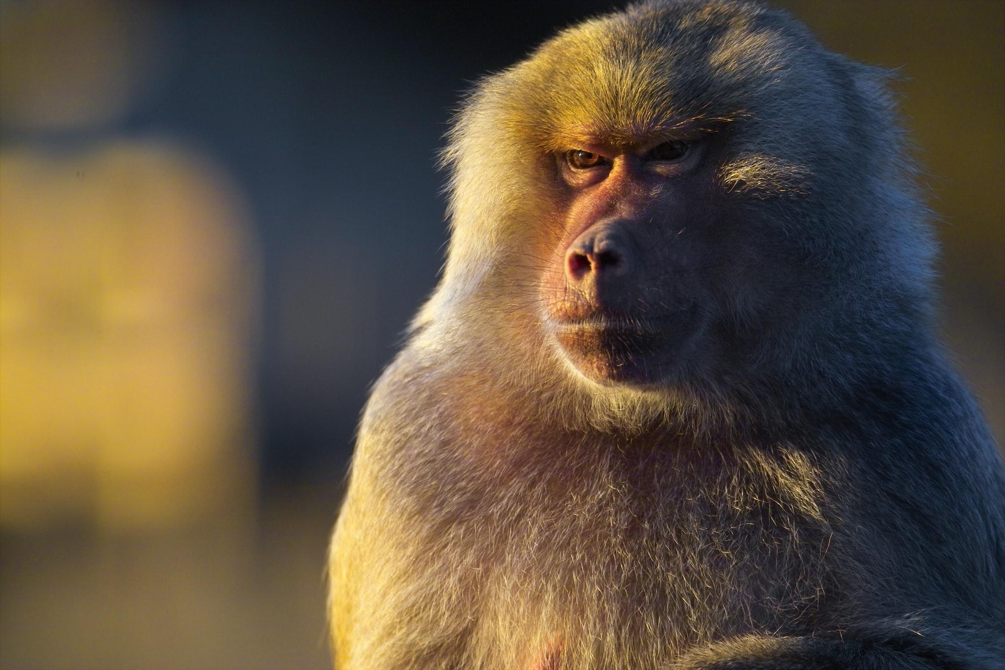 La révolte des singes de wall-street