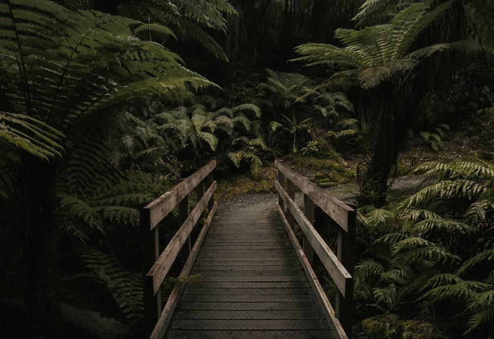 forest mini bridge