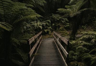 forest mini bridge moody teams background