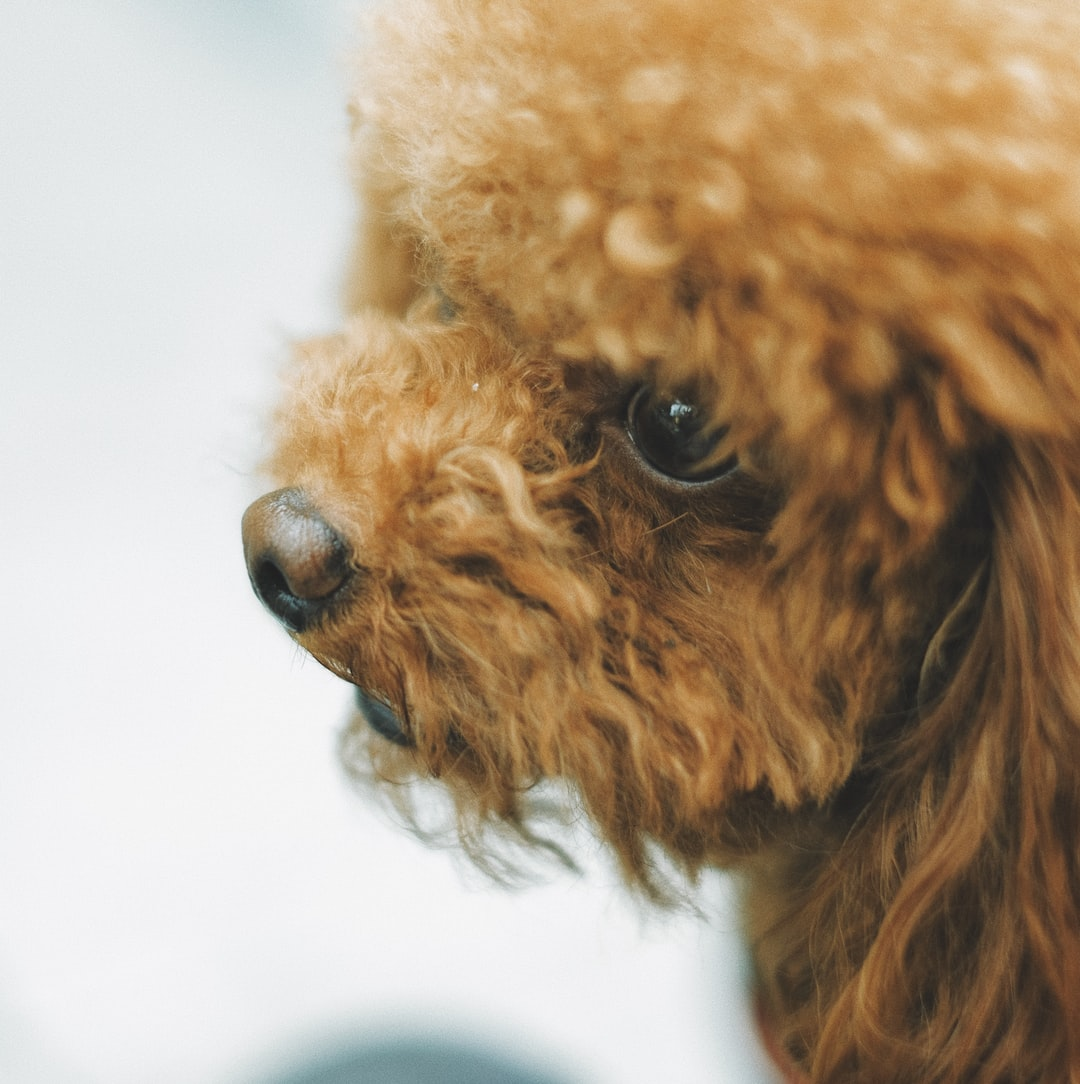 There's Dog Hair Everywhere: How To Control Dog Fur For Good