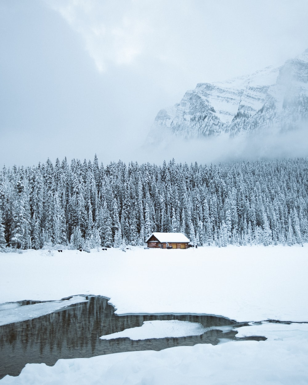 brown shack beside forest during snow