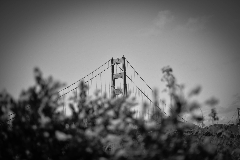 gray bridge grayscale photo