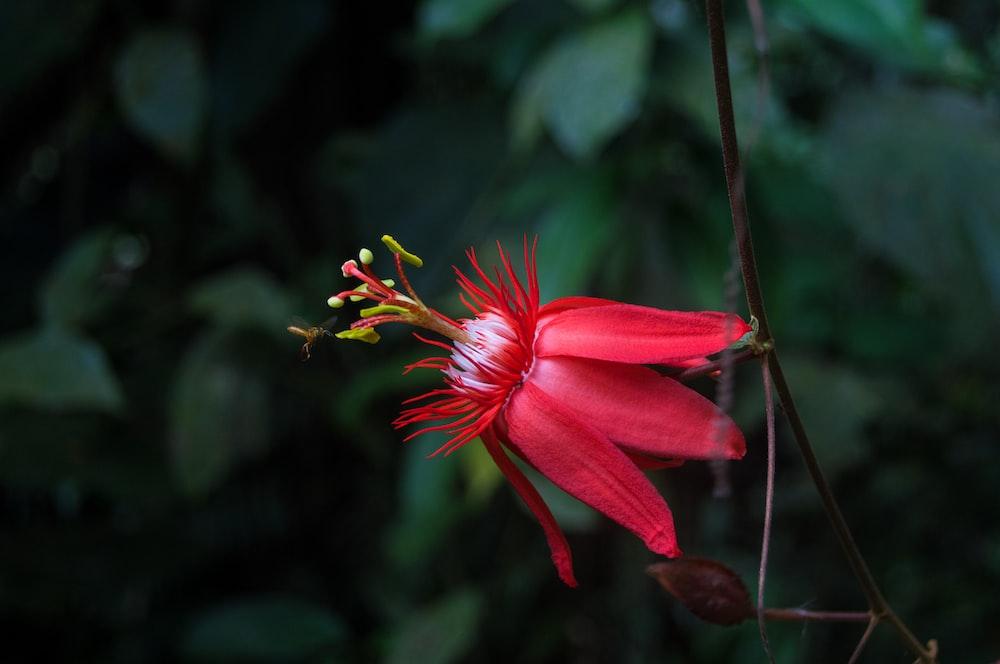 macro shot of red flower
