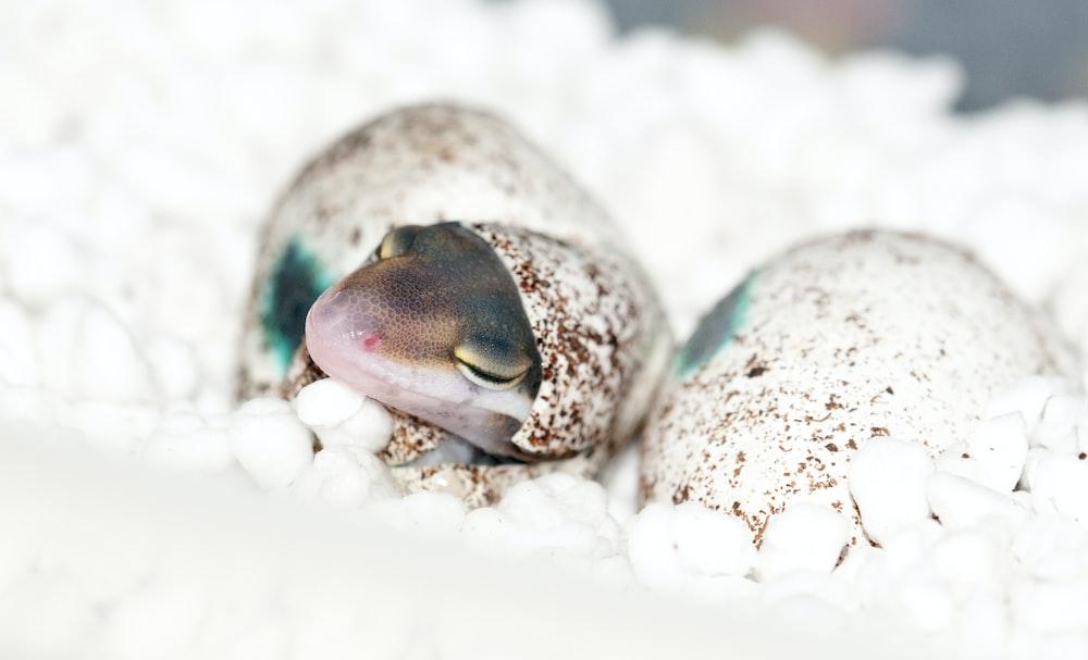 hatched gecko on foam