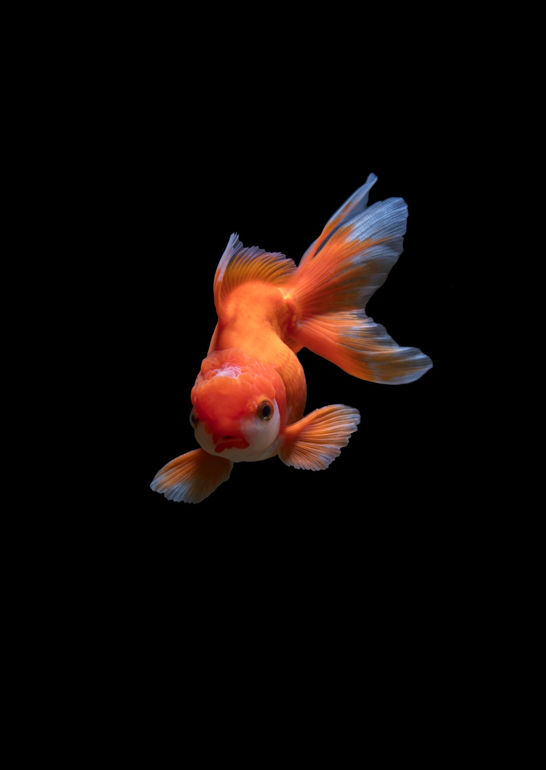 100+ Fish Images | Download Free Images & Stock Photos on