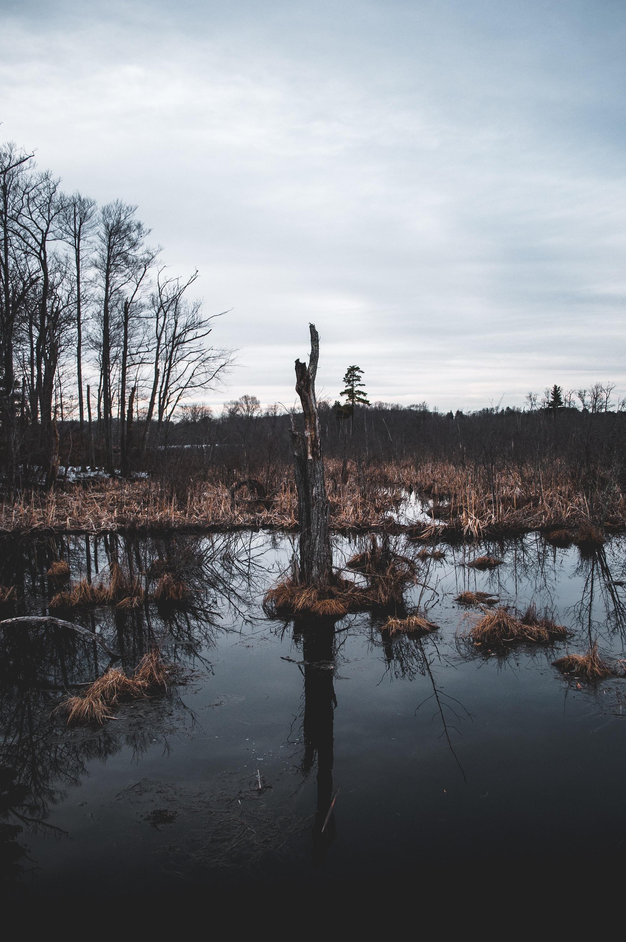 Стартап, вязнущий в болоте микросервисов и SPA фреймворков