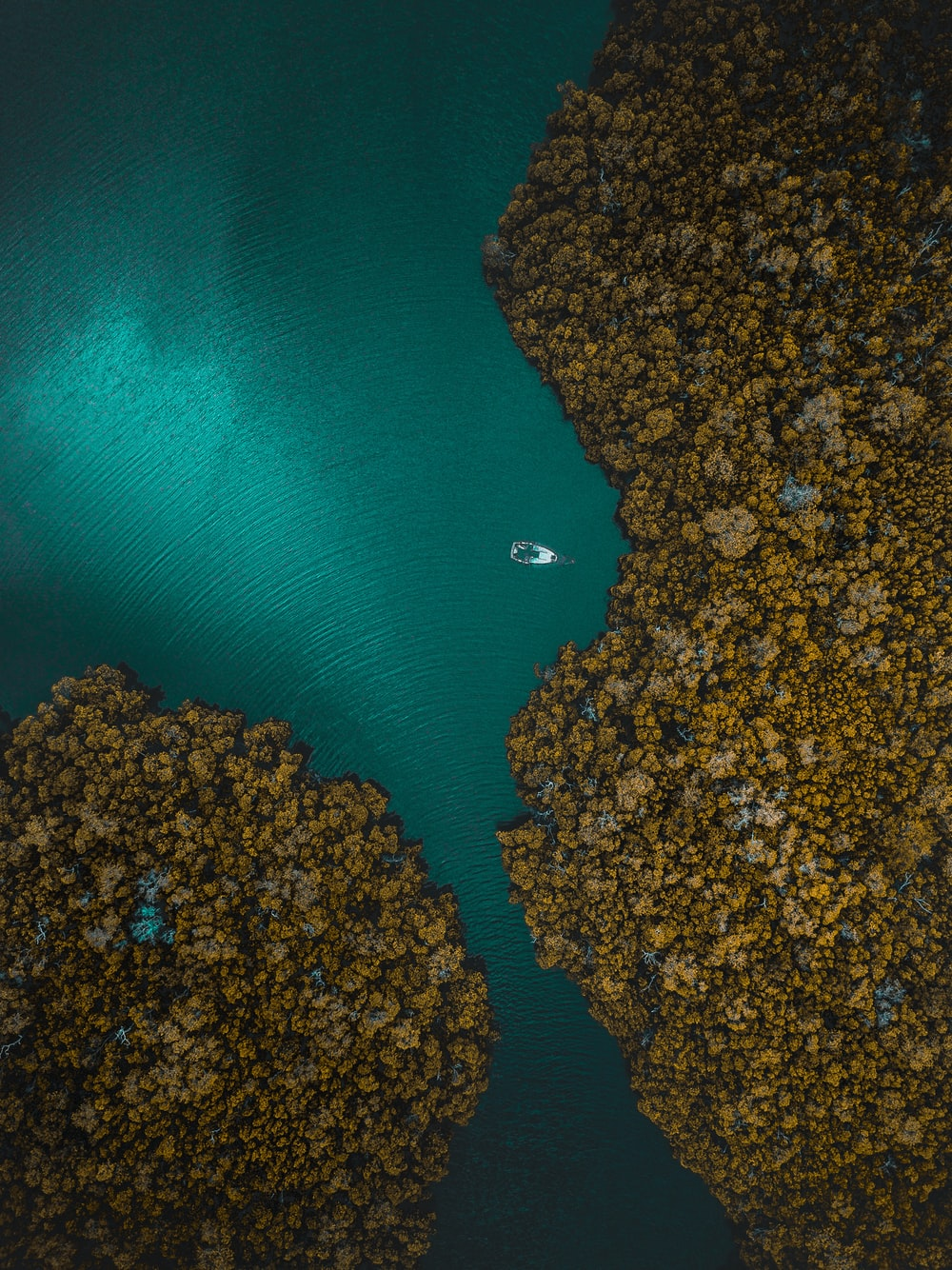 aerial photography of white boat surrounding trees