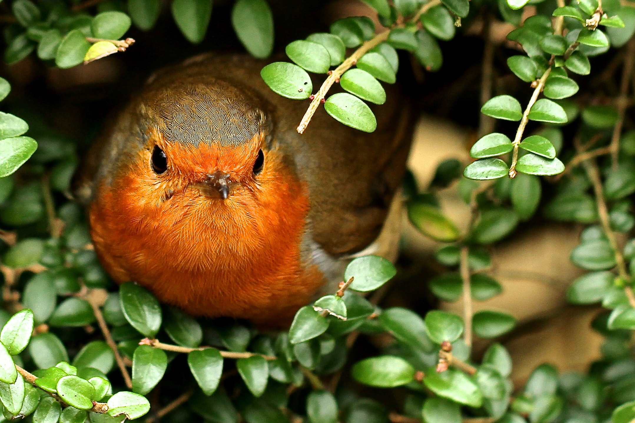 brown and orange bird perched on green plant during daytime