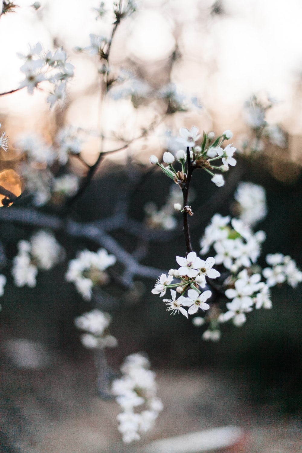 selective focus photography of white petaled flower at daytime