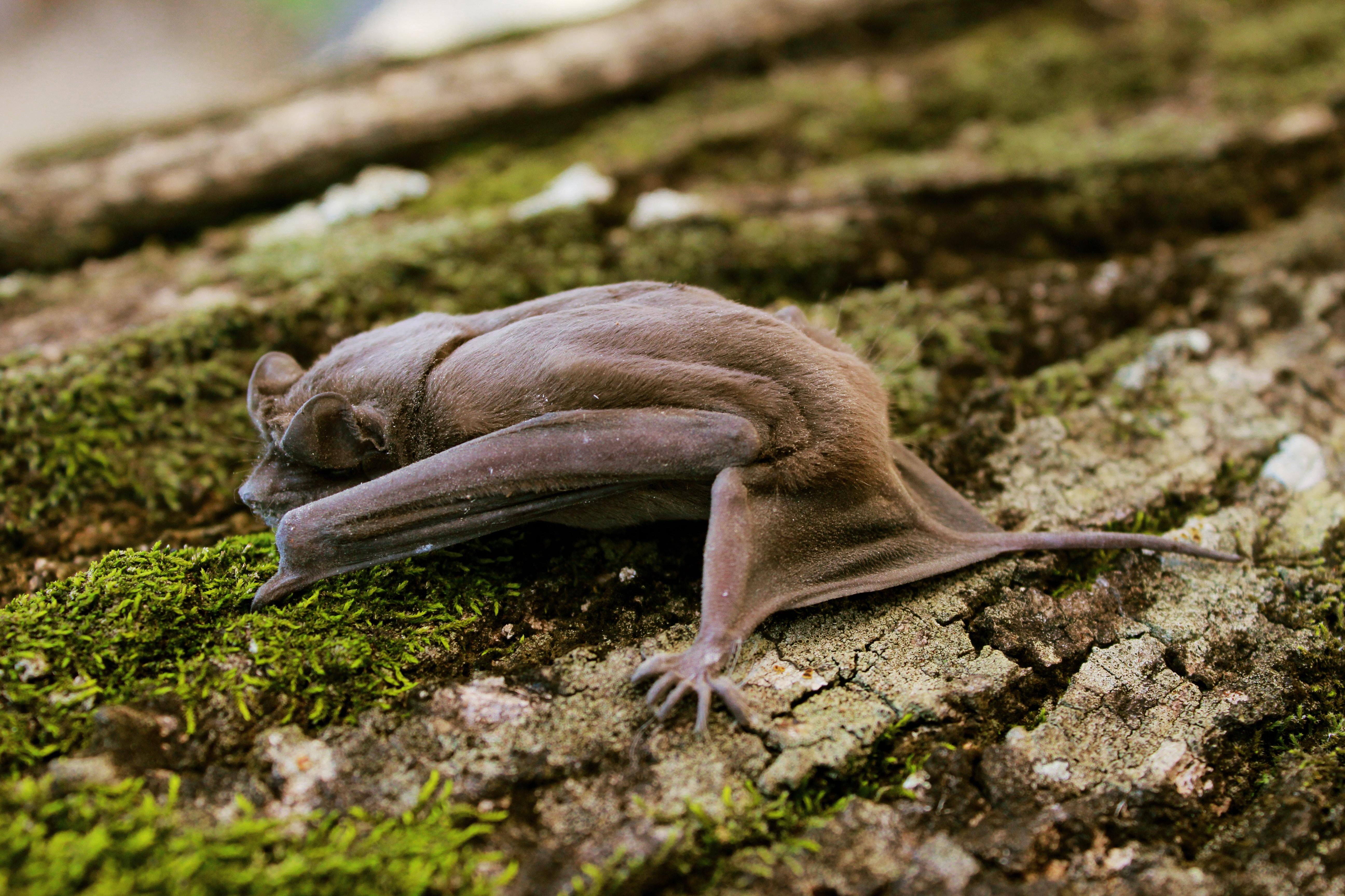 brown bat on tree
