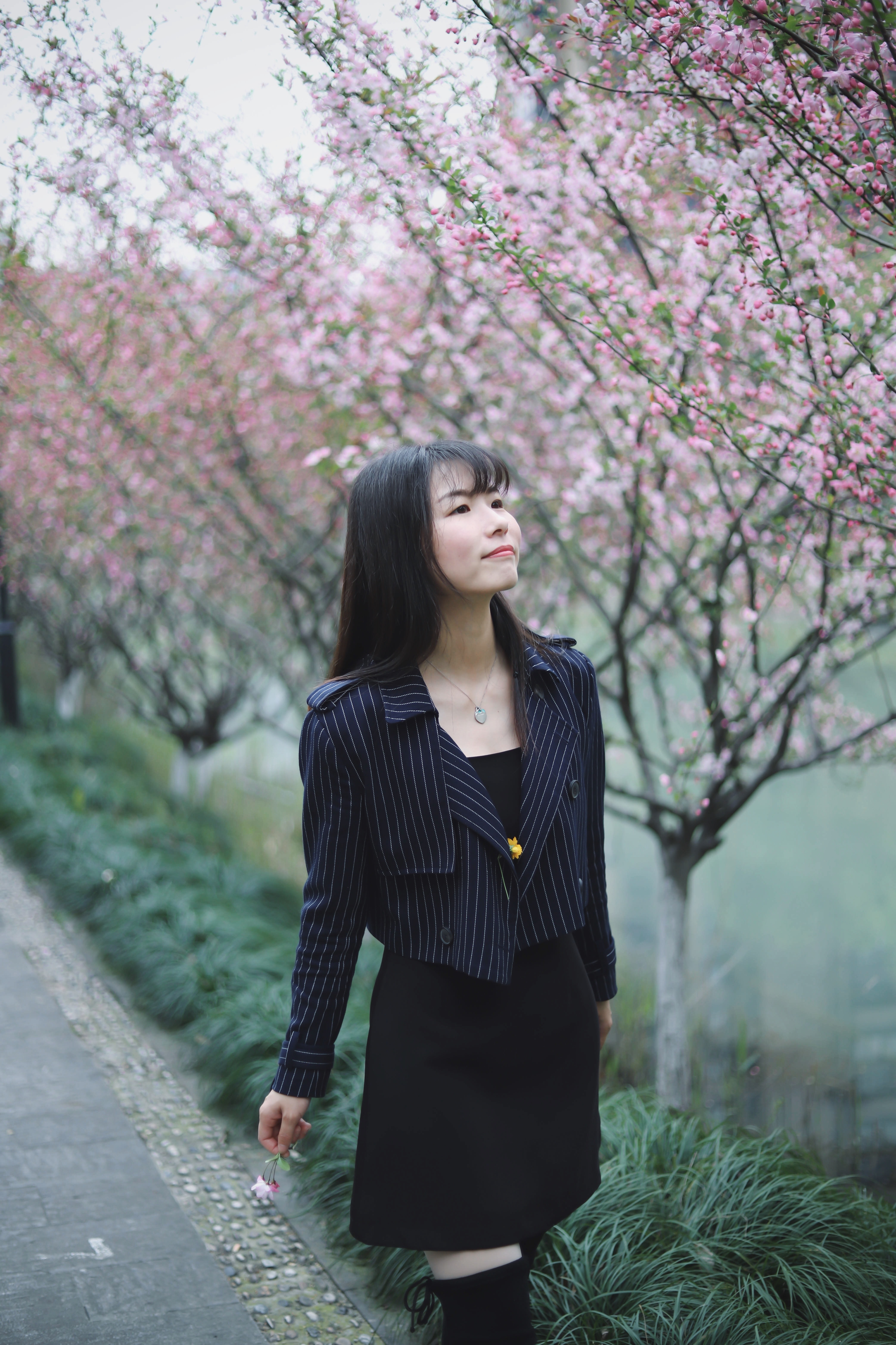 woman walking on a road with cherry blossoms