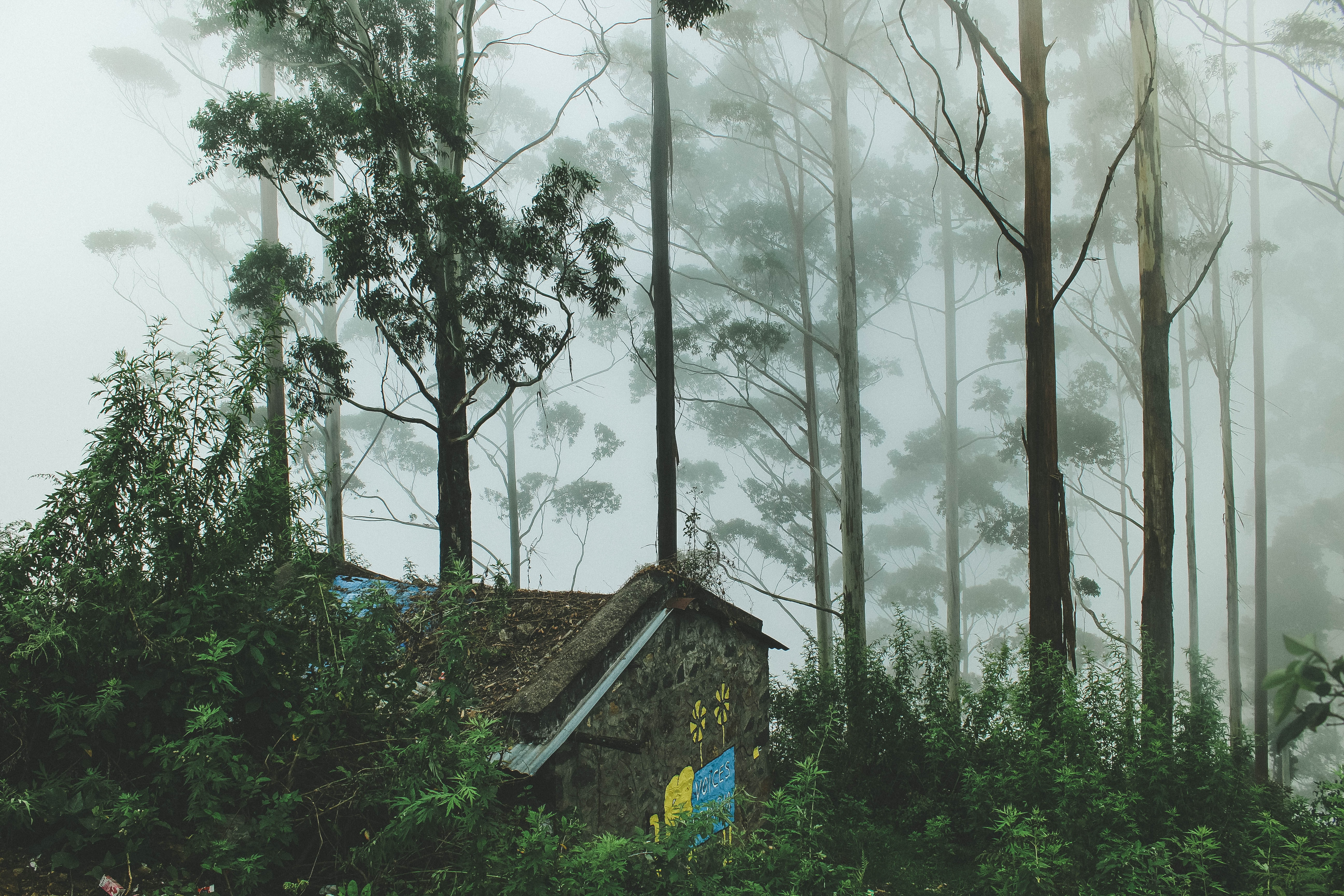 house surrounded with trees during foggy day