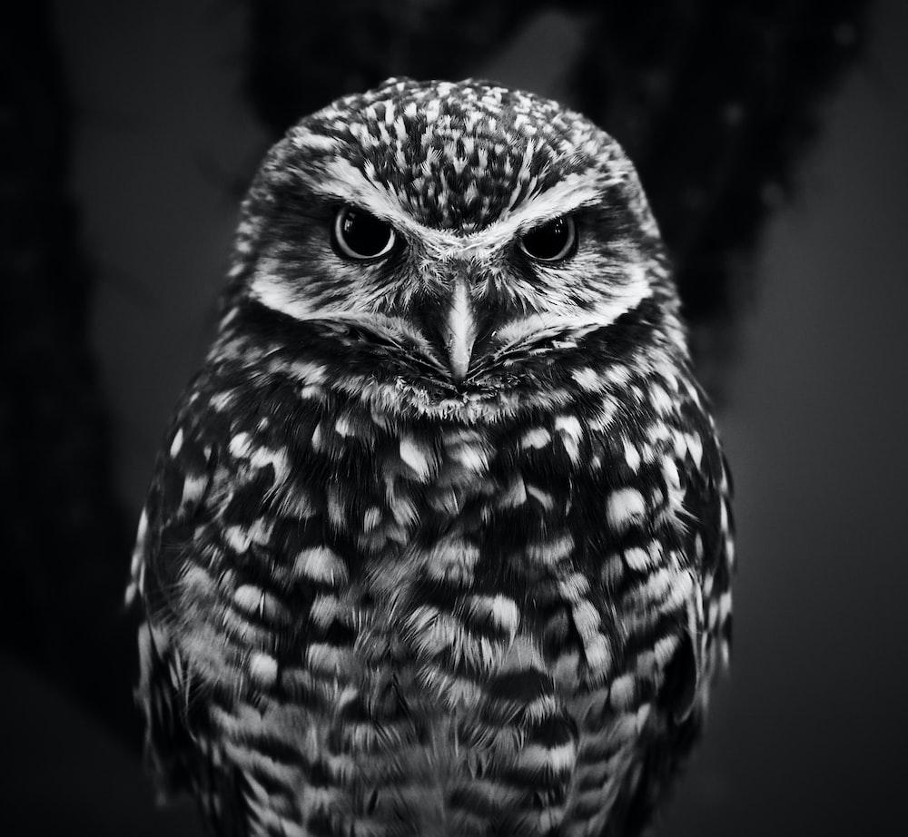 Owl hd photo by vidar nordli mathisen vidarnm on unsplash