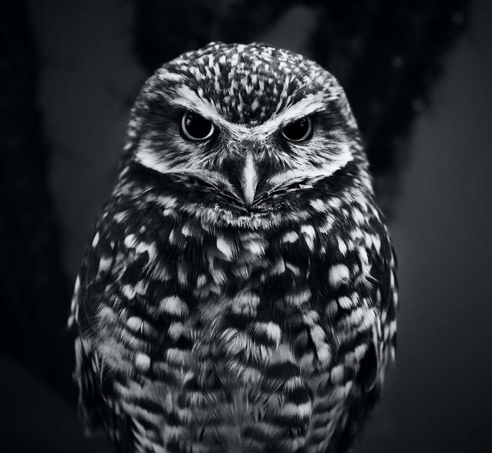 selective focus grayscale photography of owl