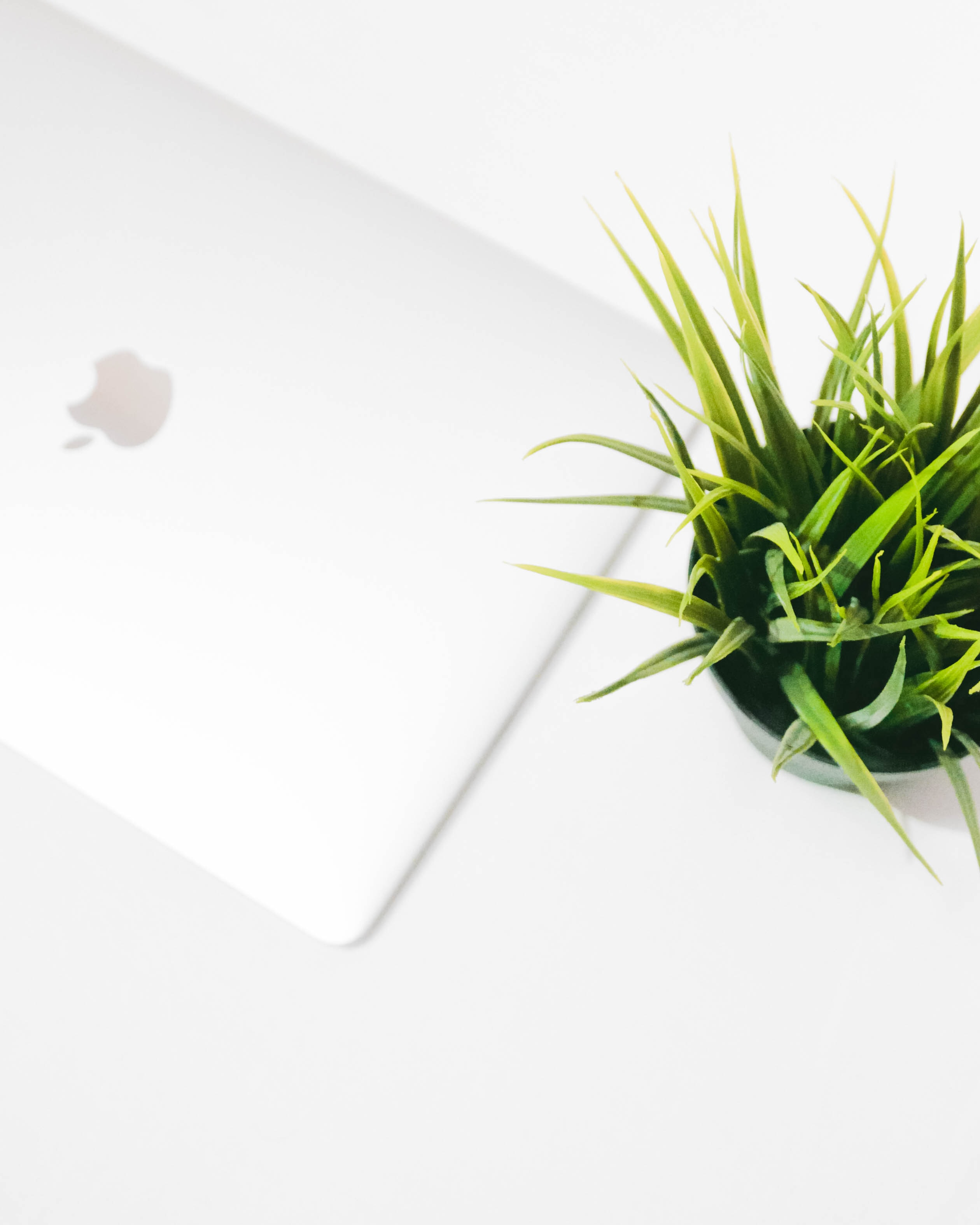 white MacBook beside green leafed plant