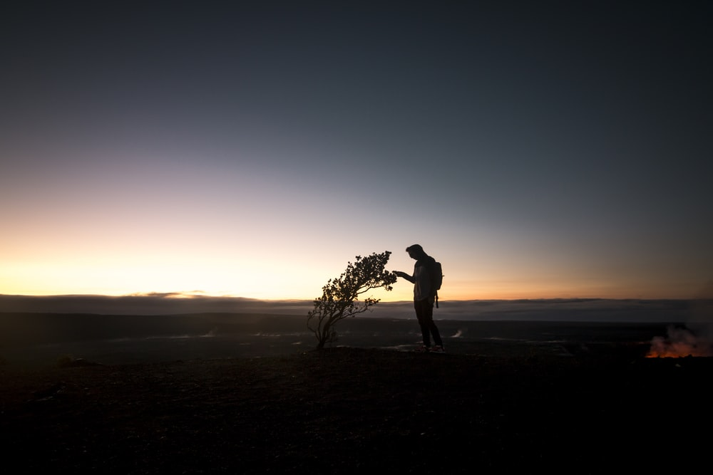 silhouette of person holding bare tree