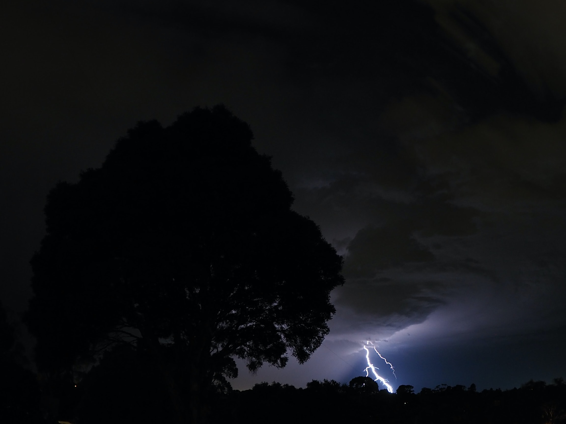photography of silhouettes of tree in front of lightning bolt