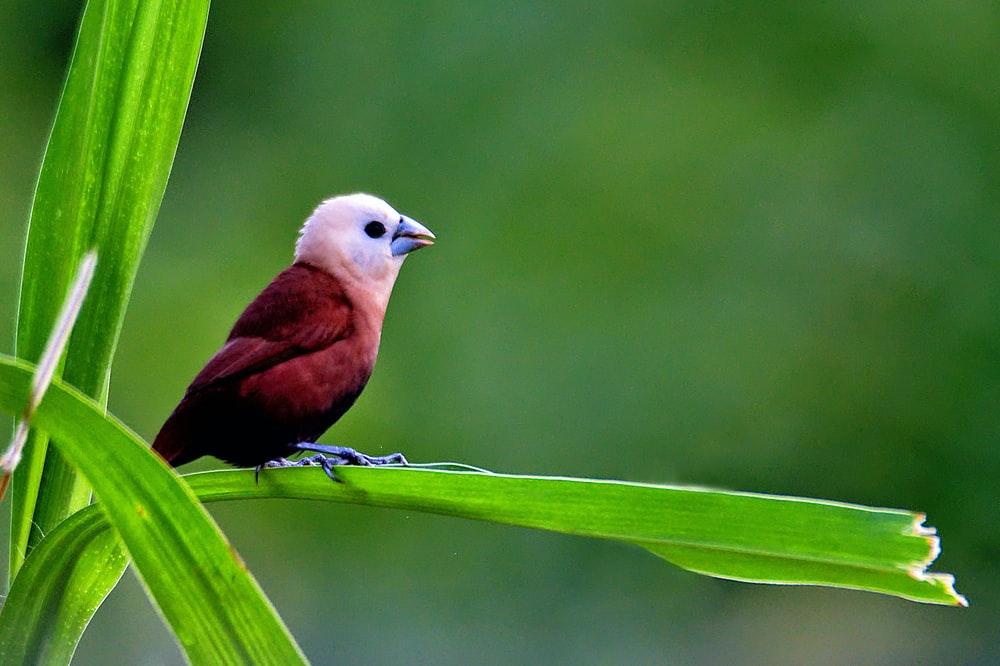 brown and white bird on green leaf
