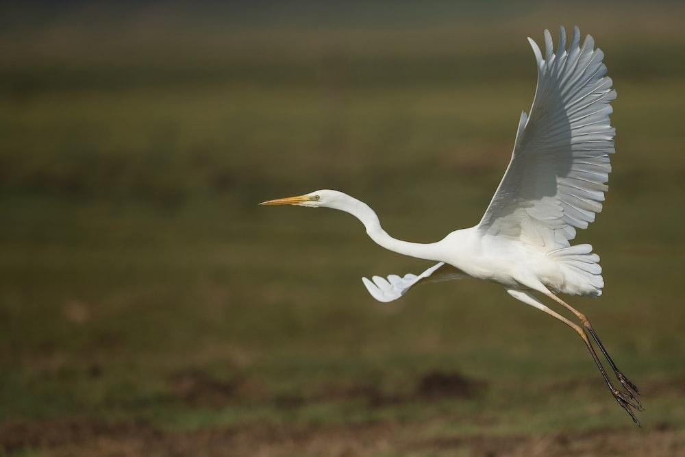 shallow photography of white bird