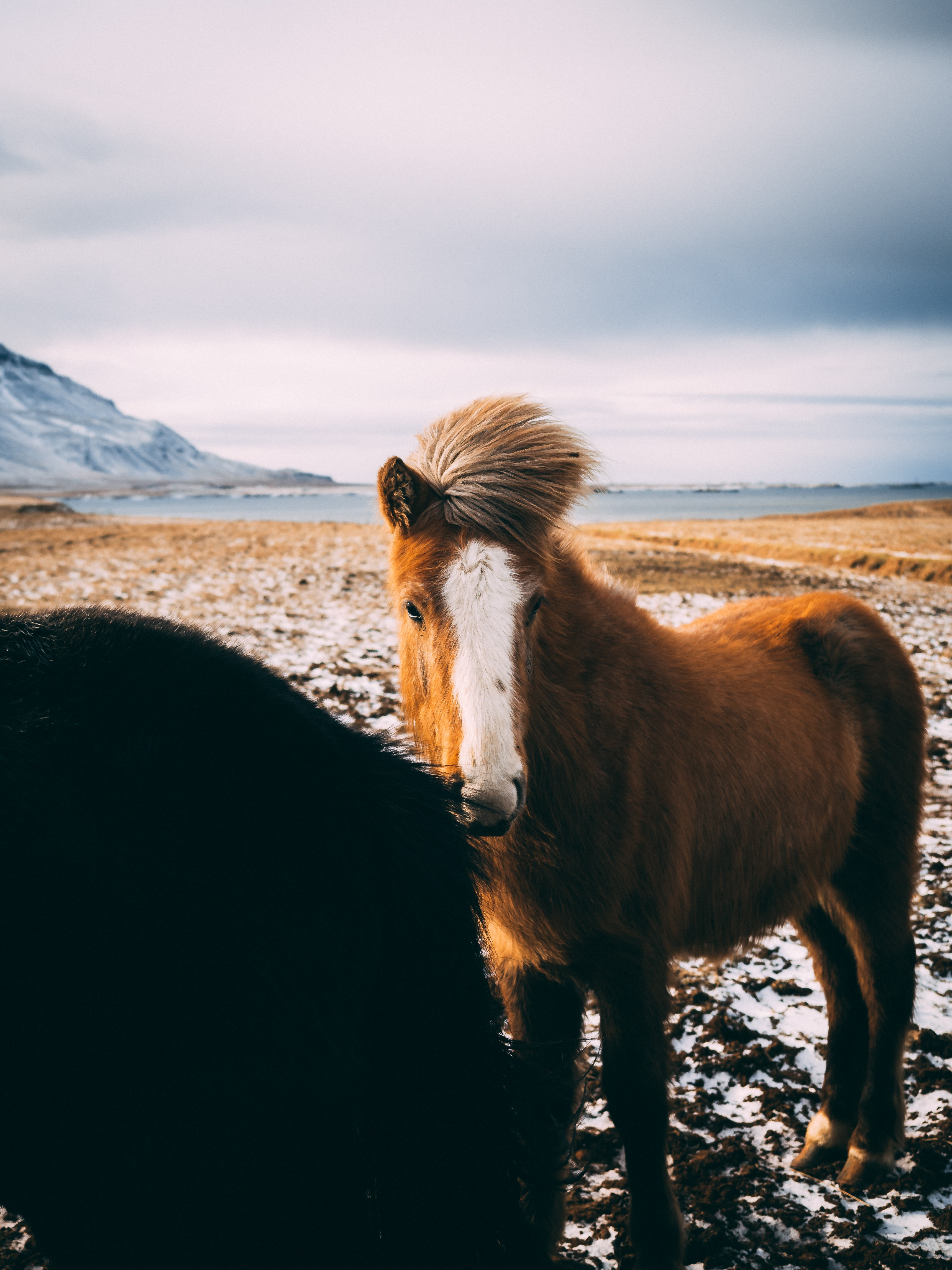 brown and white pony near body of water