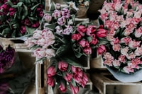 pink and purple tulips on display