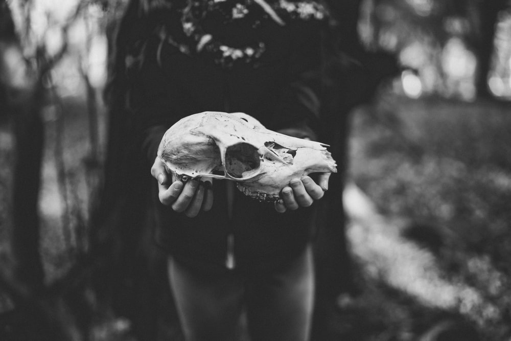 grayscale photography of person holding skull of animal